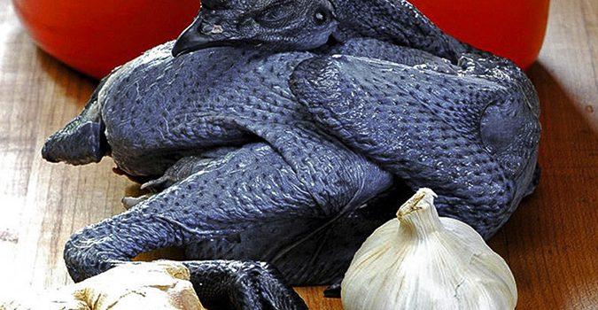 Những bài thuốc bổ dưỡng được làm từ gà ác
